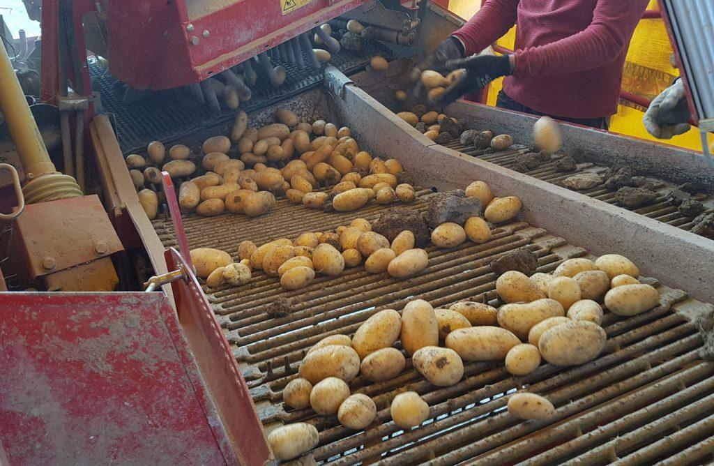 Patata de Álava